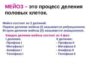 МЕЙОЗ – это процесс деления половых клеток. Мейоз состоит из 2 делений. Первое д
