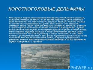 КОРОТКОГОЛОВЫЕ ДЕЛЬФИНЫ Род морских зверей подсемейства дельфинов; объединяет жи