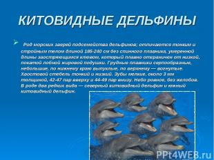 КИТОВИДНЫЕ ДЕЛЬФИНЫ Род морских зверей подсемейства дельфинов; отличаются тонким