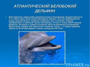 АТЛАНТИЧЕСКИЙ БЕЛОБОКИЙ ДЕЛЬФИН Вид морского зверя рода короткоголовых дельфинов