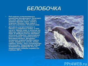 БЕЛОБОЧКА Род морских млекопитающих семейства дельфиновых; включает два вида. Дл