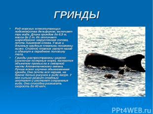 ГРИНДЫ Род морских млекопитающих подсемейства дельфинов; включает три вида. Длин