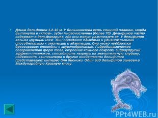 Длина дельфинов 1,2-10 м. У большинства есть спинной плавник, морда вытянута в «