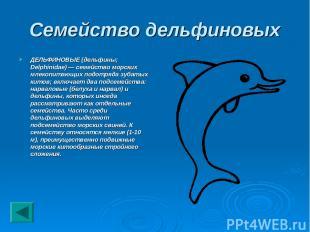 Семейство дельфиновых ДЕЛЬФИНОВЫЕ (дельфины; Delphinidae) — семейство морских мл