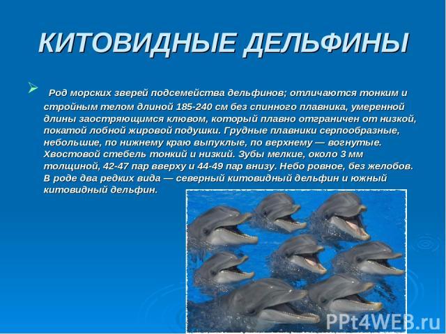 КИТОВИДНЫЕ ДЕЛЬФИНЫ Род морских зверей подсемейства дельфинов; отличаются тонким и стройным телом длиной 185-240 см без спинного плавника, умеренной длины заостряющимся клювом, который плавно отграничен от низкой, покатой лобной жировой подушки. Гру…