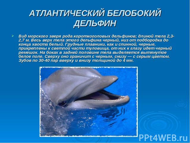 АТЛАНТИЧЕСКИЙ БЕЛОБОКИЙ ДЕЛЬФИН Вид морского зверя рода короткоголовых дельфинов; длиной тела 2,3-2,7 м. Весь верх тела этого дельфина черный, низ от подбородка до конца хвоста белый. Грудные плавники, как и спинной, черные, прикреплены к светлой ча…