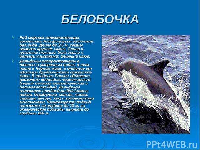 БЕЛОБОЧКА Род морских млекопитающих семейства дельфиновых; включает два вида. Длина до 2,6 м, самцы немного крупнее самок. Спина и плавники темные, бока серые с белыми участками; длинный клюв. Дельфины распространены в теплых и умеренных водах, в то…