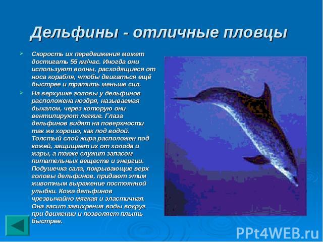 Дельфины - отличные пловцы Скорость их передвижения может достигать 55 км/час. Иногда они используют волны, расходящиеся от носа корабля, чтобы двигаться ещё быстрее и тратить меньше сил. На верхушке головы у дельфинов расположена ноздря, называемая…