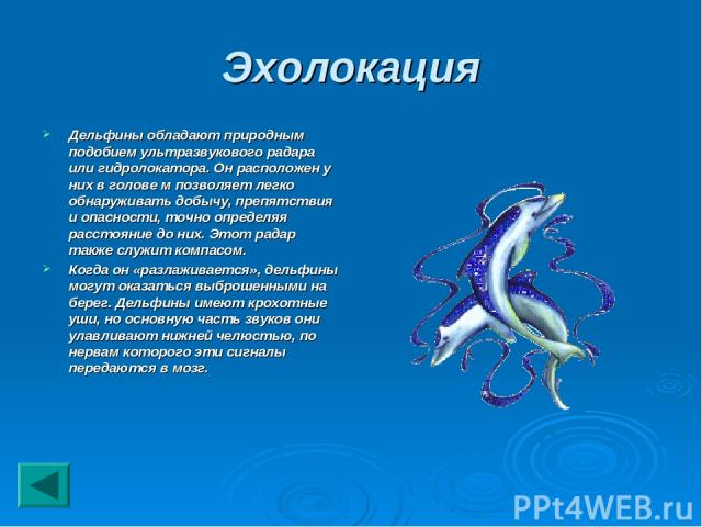 Эхолокация Дельфины обладают природным подобием ультразвукового радара или гидролокатора. Он расположен у них в голове м позволяет легко обнаруживать добычу, препятствия и опасности, точно определяя расстояние до них. Этот радар также служит компасо…
