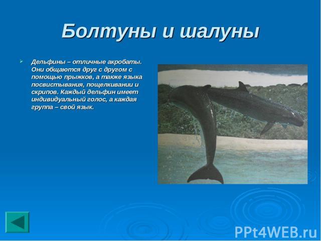 Болтуны и шалуны Дельфины – отличные акробаты. Они общаются друг с другом с помощью прыжков, а также языка посвистывания, пощелкивании и скрипов. Каждый дельфин имеет индивидуальный голос, а каждая группа – свой язык.