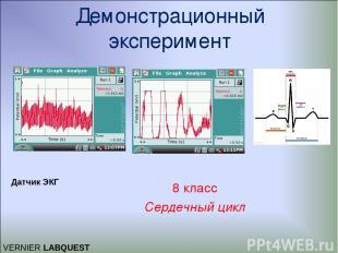 Демонстрационный эксперимент 8 класс Сердечный цикл VERNIER LABQUEST Датчик ЭКГ