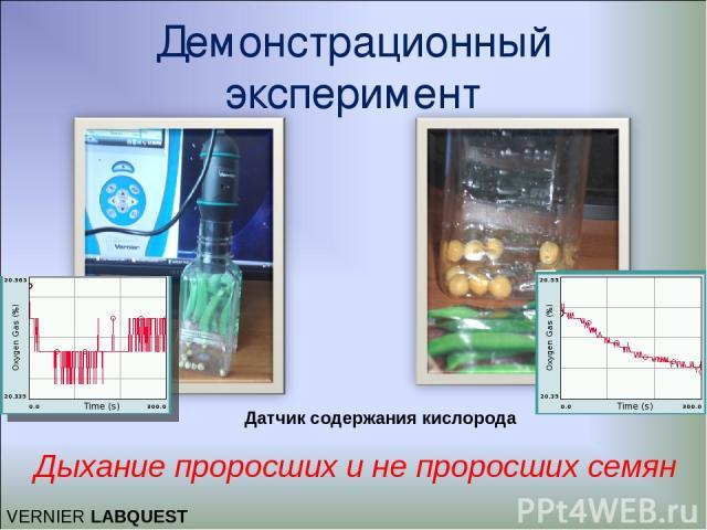 Демонстрационный эксперимент Дыхание проросших и не проросших семян VERNIER LABQUEST Датчик содержания кислорода