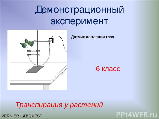 Демонстрационный эксперимент Транспирация у растений 6 класс Датчик давления газа VERNIER LABQUEST