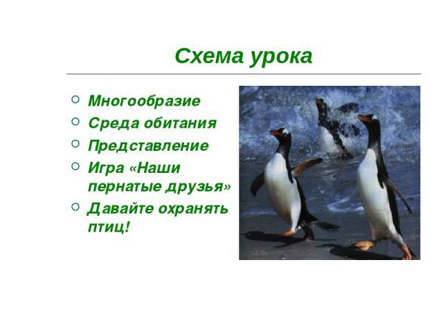 Схема урока Многообразие Среда обитания Представление Игра «Наши пернатые друзья» Давайте охранять птиц!