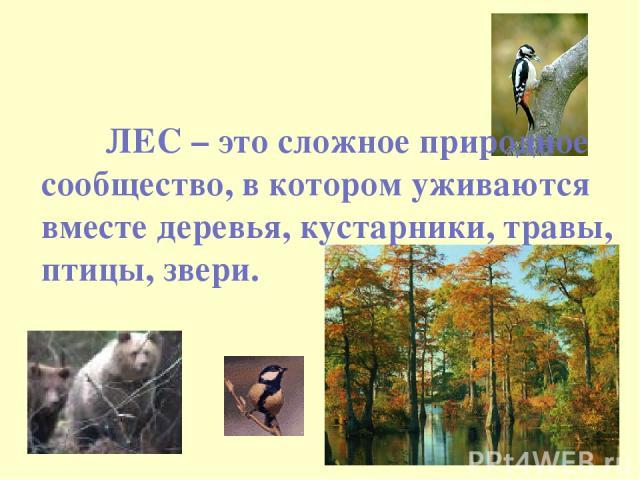 ЛЕС – это сложное природное сообщество, в котором уживаются вместе деревья, кустарники, травы, птицы, звери.