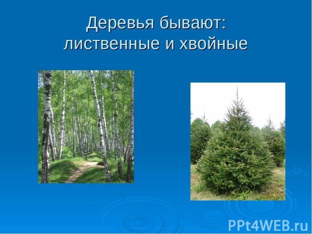 Деревья бывают: лиственные и хвойные