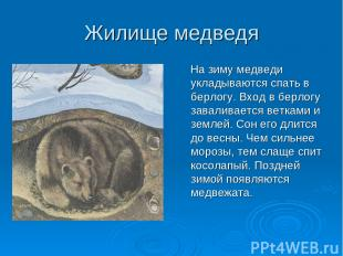 Жилище медведя На зиму медведи укладываются спать в берлогу. Вход в берлогу зава