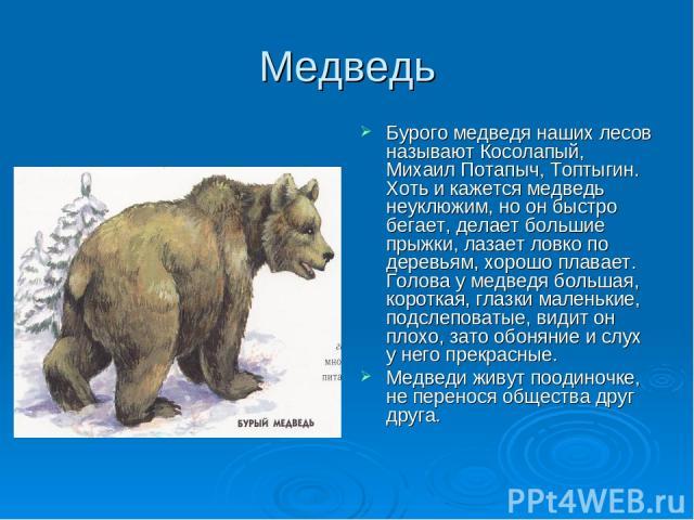 Медведь Бурого медведя наших лесов называют Косолапый, Михаил Потапыч, Топтыгин. Хоть и кажется медведь неуклюжим, но он быстро бегает, делает большие прыжки, лазает ловко по деревьям, хорошо плавает. Голова у медведя большая, короткая, глазки мален…