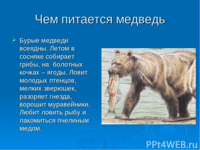 Чем питается медведь Бурые медведи всеядны. Летом в сосняке собирает грибы, на болотных кочках – ягоды. Ловит молодых птенцов, мелких зверюшек, разоряет гнезда, ворошит муравейники. Любит ловить рыбу и лакомиться пчелиным медом.