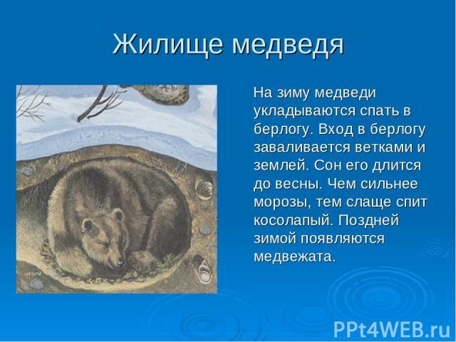 Жилище медведя На зиму медведи укладываются спать в берлогу. Вход в берлогу заваливается ветками и землей. Сон его длится до весны. Чем сильнее морозы, тем слаще спит косолапый. Поздней зимой появляются медвежата.