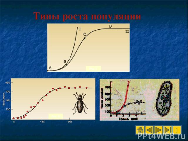 Рис.1 Рис. 2 Типы роста популяции Рис. 3