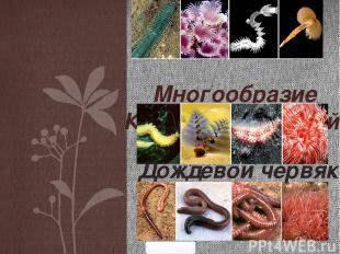 Многообразие Кольчатых червей. Дождевой червяк 5klass.net