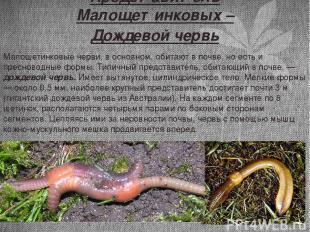 Представитель Малощетинковых – Дождевой червь Малощетинковые черви, в основном,