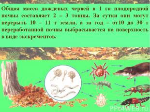 Общая масса дождевых червей в 1 га плодородной почвы составляет 2 – 3 тонны. За