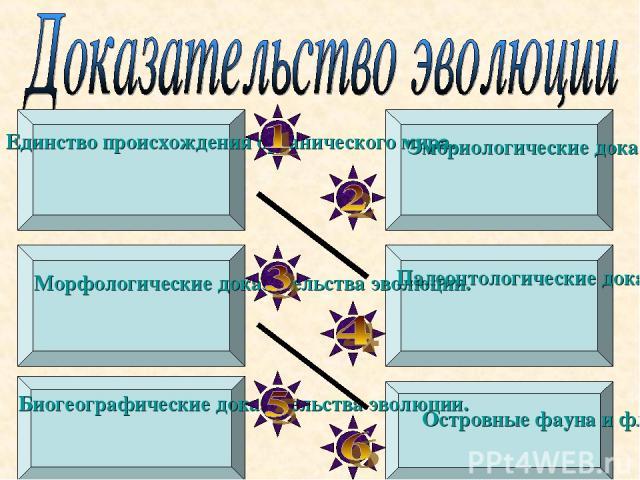 Единство происхождения органического мира. Эмбриологические доказательства эволюции. Морфологические доказательства эволюции. Палеонтологические доказательства эволюции. Биогеографические доказательства эволюции. Островные фауна и флора.
