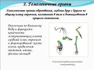 2. Гомологичные органы Гомологичные органы-образования, сходные друг с другом по