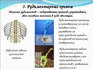 Наличие рудиментов – недоразвитых органов, утративших свое основное значение в х