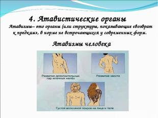 4. Атавистические органы Атавизмы– это органы (или структуры, показывающие «возв