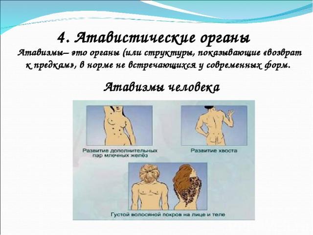 4. Атавистические органы Атавизмы– это органы (или структуры, показывающие «возврат к предкам», в норме не встречающихся у современных форм. Атавизмы человека
