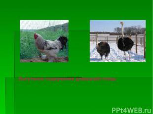 Выгульное содержание домашней птицы