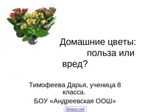 Домашние цветы: польза или вред? Тимофеева Дарья, ученица 8 класса. БОУ «Андреев