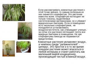 Если рассматривать комнатные растения с этой точки зрения, то самым полезным из