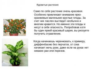 Ядовитые растения Само по себе растение очень красивое. Особенно привлекают вним