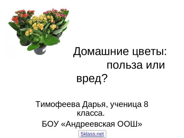 Домашние цветы: польза или вред? Тимофеева Дарья, ученица 8 класса. БОУ «Андреевская ООШ» 5klass.net