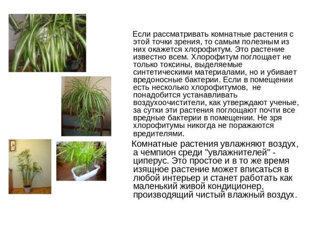 Если рассматривать комнатные растения с этой точки зрения, то самым полезным из них окажется хлорофитум. Это растение известно всем. Хлорофитум поглощает не только токсины, выделяемые синтетическими материалами, но и убивает вредоносные бактерии. Ес…
