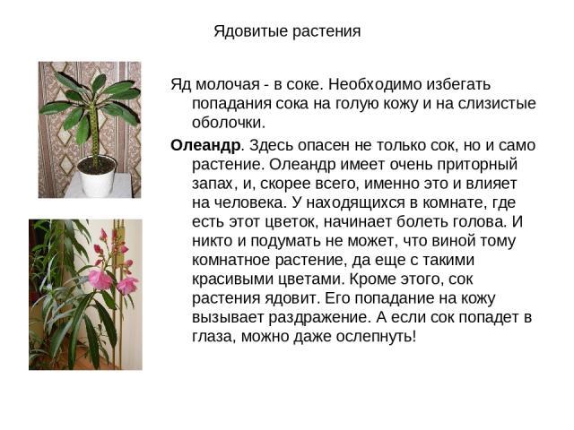 Ядовитые растения Яд молочая - в соке. Необходимо избегать попадания сока на голую кожу и на слизистые оболочки. Олеандр. Здесь опасен не только сок, но и само растение. Олеандр имеет очень приторный запах, и, скорее всего, именно это и влияет на че…