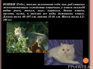 КОШКИ (Felis), также включают себя как род хищных млекопитающих семейства кошачь
