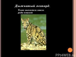 Дымчатый леопард. Тоже является своего рода кошкой