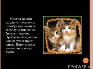 Иногда кошки уходят от человека, приобретая полную свободу, а иногда ее бросает