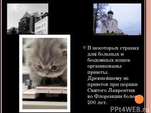 В некоторых странах для больных и бездомных кошек организованы приюты. Древнейше