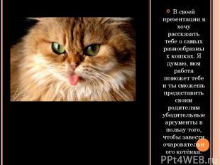 В своей презентации я хочу рассказать тебе о самых разнообразных кошках. Я думаю