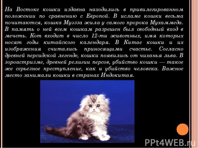 На Востоке кошки издавна находились в привилегированном положении по сравнению с Европой. В исламе кошки весьма почитаются, кошка Муэзза жила у самого пророка Мухаммеда. В память о ней всем кошкам разрешен был свободный вход в мечеть. Кот входит в ч…