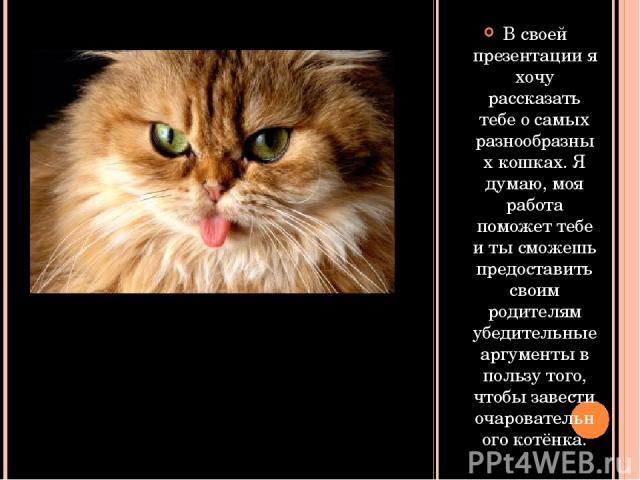 В своей презентации я хочу рассказать тебе о самых разнообразных кошках. Я думаю, моя работа поможет тебе и ты сможешь предоставить своим родителям убедительные аргументы в пользу того, чтобы завести очаровательного котёнка.