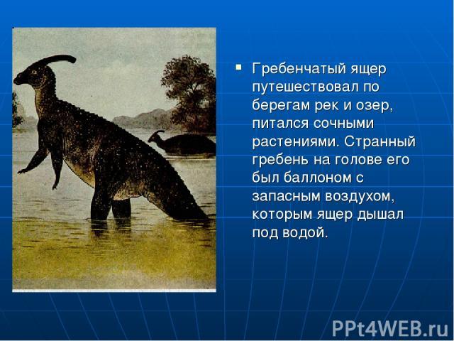 Гребенчатый ящер путешествовал по берегам рек и озер, питался сочными растениями. Странный гребень на голове его был баллоном с запасным воздухом, которым ящер дышал под водой.