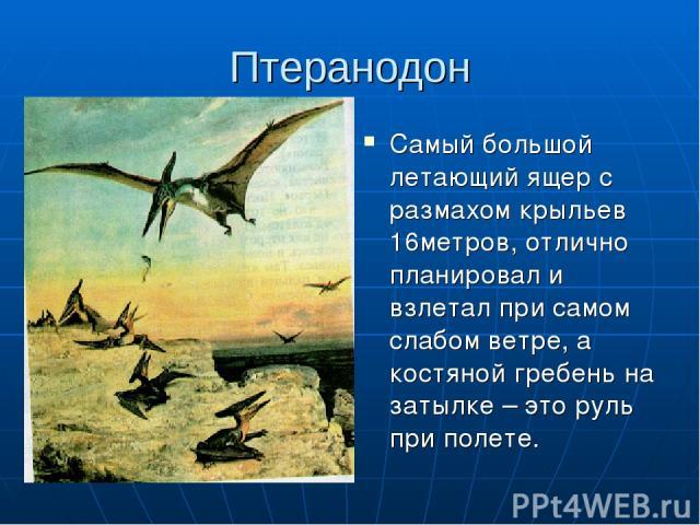 Птеранодон Самый большой летающий ящер с размахом крыльев 16метров, отлично планировал и взлетал при самом слабом ветре, а костяной гребень на затылке – это руль при полете.