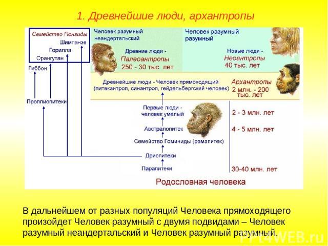 1. Древнейшие люди, архантропы В дальнейшем от разных популяций Человека прямоходящего произойдет Человек разумный с двумя подвидами – Человек разумный неандертальский и Человек разумный разумный.